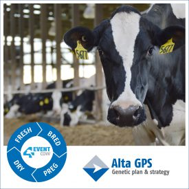 Polaroid style image of Alta 4-EVENT 5677 along with the 4-EVENT COW and Alta Genetic Plan and strategy logos
